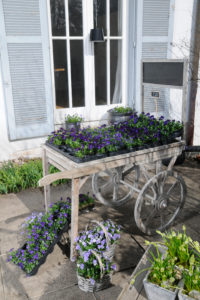 Flowerpots on old wooden carriage, outdoors,