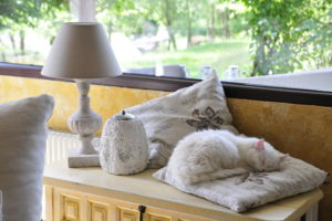 White long-haired cat sleeping on cushion at the window