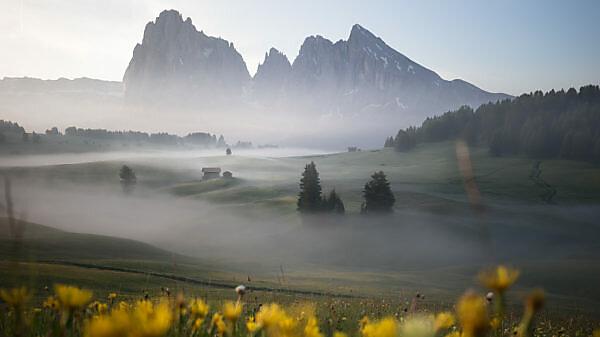 Sonnenaufgang über der Seiser Alm / Alpe di Siusi in den Dolomiten, Südtirol, Italien. Nebel verschleiert die einzelnen Waldabschnitte und Almhütten. Im Vordergrund gelbe Blüten