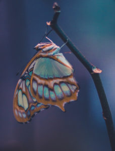 Colourful butterfly, close up