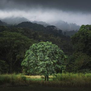 Tropenwälder in Costa Rica im Vordergrund ein isolierter Baum vor verschiedenen Schichten der Tropenwälder