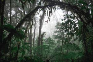 Ein Ara im Dschungel in Costa Rica bei Monteverde