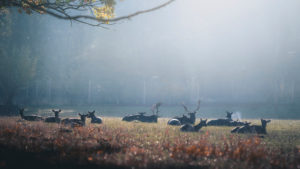 Deer and roe deer at sunrise in a wildlife park near Bonn. Silhouettes, haze, autumn