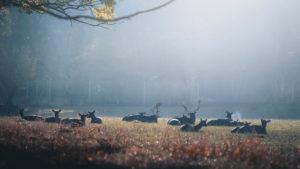 Hirsche und Rehe im Sonnenaufgang in einem Wildpark bei Bonn. Silhouetten, Dunst, Herbst
