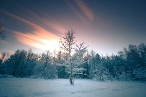 Sonnenuntergang im Winter im finnischen Turku, Finnland. Einzelner Baum in der Mitte