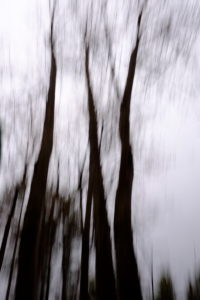 Blurred images of maple trees photographed in time exposure during up and down motion