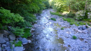 Tannery Brook which runs through Woodstock NY is a tributary to Hudson River