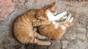 zwei schlafende Kätzchen