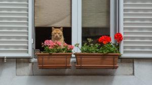 Katze im Fenster hinter Blumenkästen