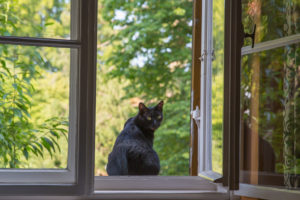schwarze Katze sitzt am offenen Fenster