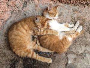 zwei schlafende Katzen