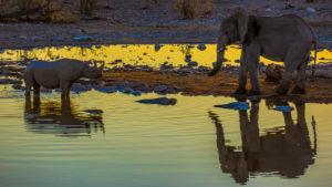 Nashorn und Elefant am Wasserloch