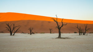 abgestorbene Bäume in der Salzwüste