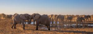 Elefanten am Wasserloch, kämpfende Elefanten