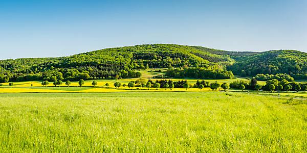 Panorama of meadows and rapeseed fields near Merxheim, Naheland, trees, avenue,