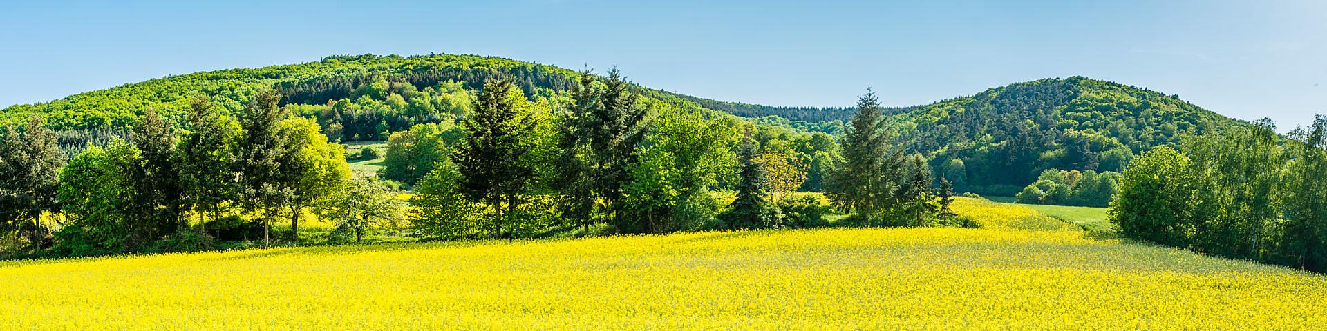 Panorama of meadows and rapeseed fields near Merxheim, Naheland,
