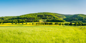 Panorama of meadows and rapeseed fields near Merxheim, Naheland, trees, avenue,