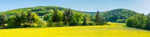 Panorama of meadows and rapeseed fields near Merxheim, Naheland,