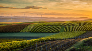 Golden October in Rheinhessen, wine growing in the hills near Vendersheim,