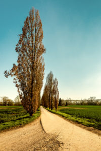 Poplar-Alle to the Angler-Klause, Ingelheim, on the Leberts-Au, Rheinhessen, evening mood