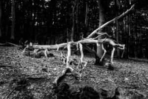 dead, bizarre dead tree in the forest, SW