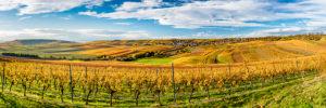 Goldener Oktober in Rheinhessen,  Hügellandschaft bei Vendersheim, hochauflösendes Panorama