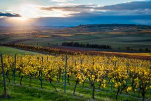 herbstliche Abendstimmung in Rheinhessen, Goldener Oktober in der Hügellandschaft bei  Vendersheim,