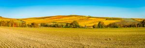 autumn evening mood in Rheinhessen, golden October in the hilly landscape near Vendersheim, panorama