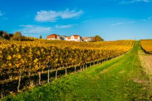 Herbststimmung in Rheinhessen, Goldener Oktober in der Hügellandschaft bei  Vendersheim,
