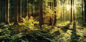 Germany, Bavaria, 'Augsburg Westliche Wälder' nature park, beams of light, sundown,