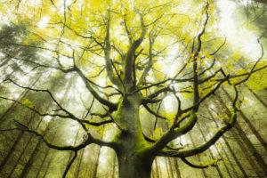 Baum, Wald, Arme, Äste, Zweige, Blätter, Herbst, Moos, Buche, mystisch, verzweigt, Stimmung,