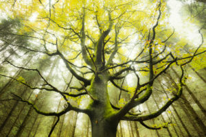 Tree, wood, branches, twigs, leaves, autumn, moss, beech, mystic, mood,