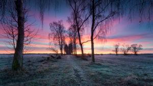 Weg, Allee, Birken, Sonnenaufgang, Wiese, Reif, Silhouetten, Farben, Wolken,