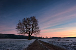 Weihnachten, Dämmerung, Sterne, Baum, Weg, Farben, Sonnenaufgang, Winter, Kälte, Reif