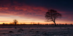 Dezember, Morgen, Gegenlicht, Weg, Baum, Himmel, Stimmung, Reif, Winter