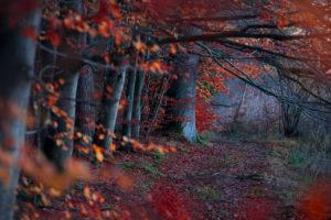 Deutschland, Bayern, Schwaben, Naturpark Westliche Wälder, Burgwalden, Weiher, Ufer, Weg, Wald, Herbst, Licht, Buchen, Stimmung, rot, Pfad,