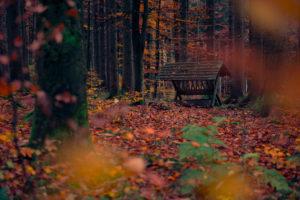 Deutschland, Bayern, Naturpark Westliche Wälder, Krippe, Futter, Herbst, Unscharf, Stamm, Farbe, Wald, Buchen, Laub, Blätter, mystisch, Landschaft, Natur,