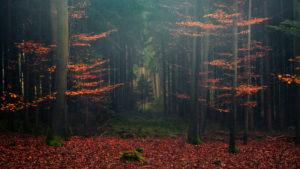 Deutschland, Bayern, Märchen, Nebel, düster, Herbst, Wittelsbach, Land, Buchen, Wald, rot, Mystisch, Weg, Pforte, Pfad, Laub, Nadelwald, Tannen, Landschaft, Panorama,