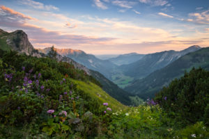 Germany, Bavaria, Schrecksee, lake, Alps, mountains, Allgäu, high Alps, view, picturesque, mood, light, morning, flowers, spring, summer, scenery,