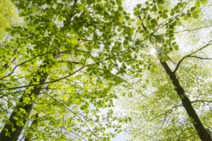 Germany, Bavaria, nature reserve, Augsburg, Western Woods Nature Park, beech, maple, deciduous forest, branch, sun, back light, shade, light, sun star, mood, idyllic, spring, green, on top, calm, nature, scenery
