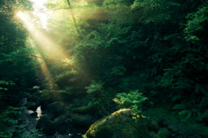 Forest with watercourse and rays of god at the Cranny Falls, Antrim, Northern Ireland