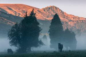 Pferde im Naturpark Gorbeia im Morgennebel vor Bergkulisse mit Alpenglühen in Nordspanien