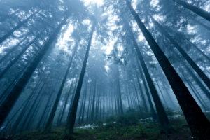 Boubin, zu deutsch 'Kubany' Urwald in Tschechien im Herbstnebel