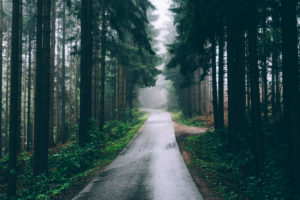 Austria, Upper Austria, Salzkammergut, road in the forest