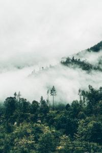 Austria, Upper Austria, Salzkammergut, forest in the fog