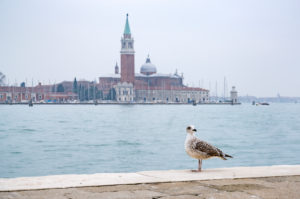 Möwe, San Giorgio Maggiore-Kirche, Venedig, historisches Zentrum, Venetien, Italien, Norditalien, Europa