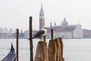 Möwe, San Giorgio Maggiore-Kirche, Venedig, historisches Zentrum, Insel, Venetien, Italien, Norditalien, Europa