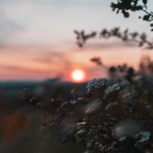 Sonnenuntergang, blühender Busch, Schwäbische Alb, Baden-Württemberg, Deutschland, Europa