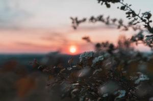 Sunset, flowering bush, Swabian Jura, Baden-Württemberg, Germany, Europe