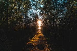 Vorsee, Wolpertswende, Sonnenuntergang, Pfad zum Steg im Wald, Oberschwaben, Baden-Württemberg, Deutschland, Europa